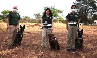 Mapa terá complexo de treinamento para cães farejadores da vigilância agropecuária