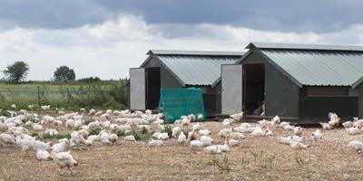Grupo LDC adquire Capestone Organic Poultry